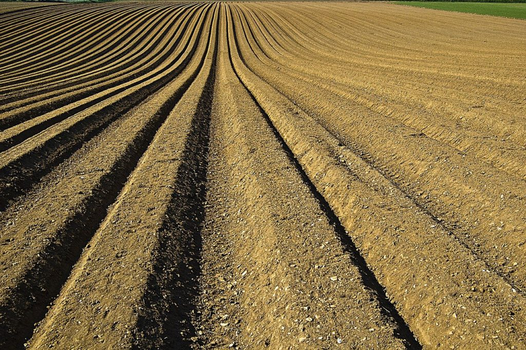crop, furrows, soil